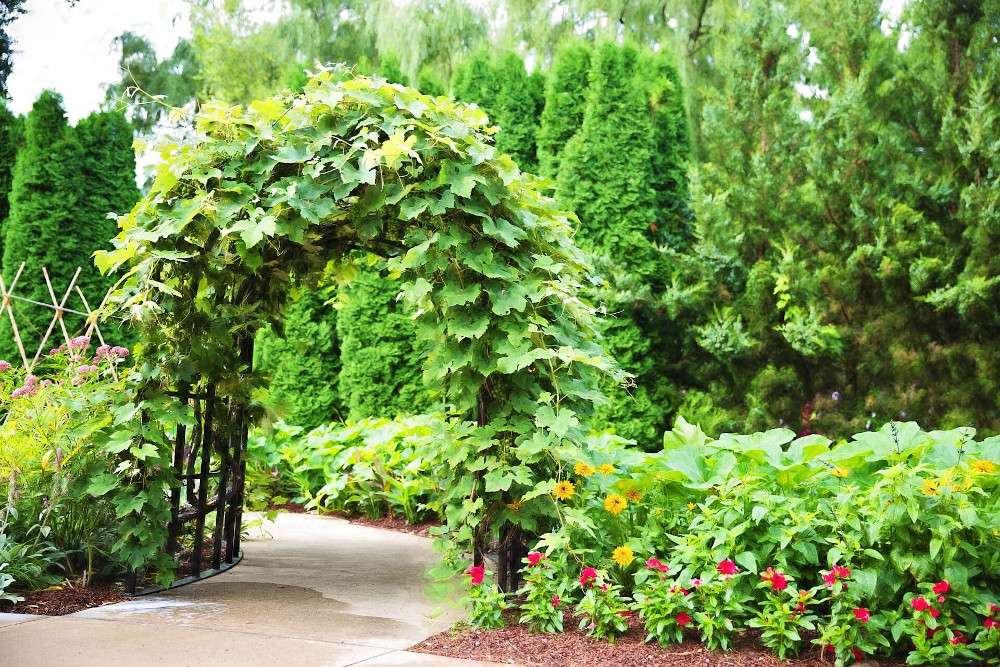 Gartenmöbel: Rankhilfe als Tor