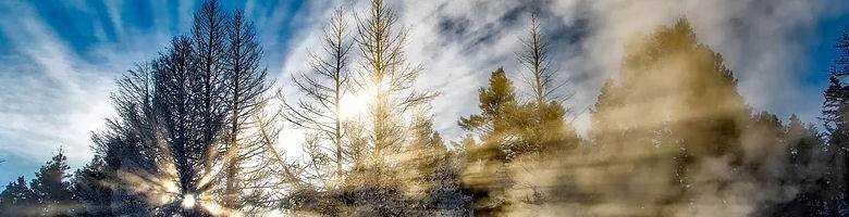 Welcher Pool ist Winterfest: Winterwald